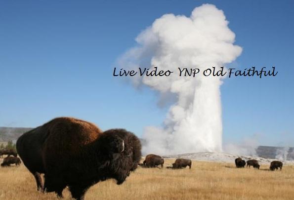 YNP Video